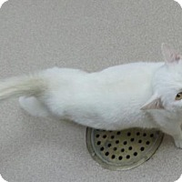 Adopt A Pet :: Lenny - Crown Point, IN