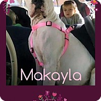 Adopt A Pet :: Makayla - Columbia, MD