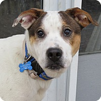 Adopt A Pet :: Mikey - Wood Dale, IL