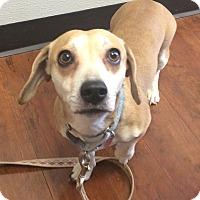 Adopt A Pet :: Valerie - Oak Ridge, NJ