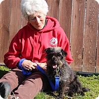 Adopt A Pet :: Hawkeye - Elyria, OH