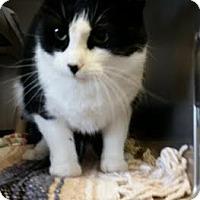 Adopt A Pet :: Patches - Chippewa Falls, WI
