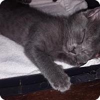 Adopt A Pet :: Lindy Lou - Orlando, FL