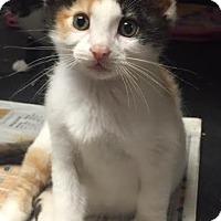 Adopt A Pet :: Angelica - Ortonville, MI