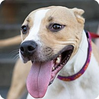 Adopt A Pet :: Pojo - Munford, TN