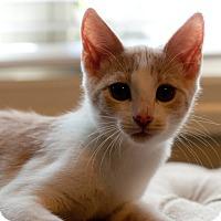 Adopt A Pet :: Enzo - Homewood, AL