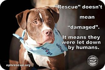 Pit Bull Terrier Mix Dog for adoption in Alexandria, Virginia - Elliott