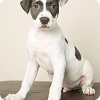 Adopt A Pet :: Griffin - Roanoke, VA