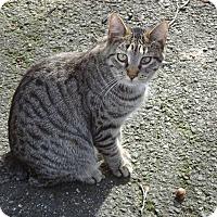 Adopt A Pet :: Polly - Central Islip, NY