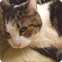 Adopt A Pet :: Lolita - Salisbury, MA