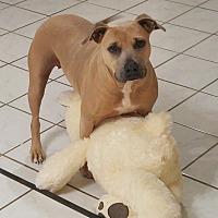 Adopt A Pet :: Nala - Houston, TX