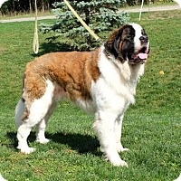 Adopt A Pet :: Tundra Thunderfoot - Ann Arbor, MI