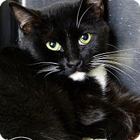 Adopt A Pet :: Mindy - Marlinton, WV