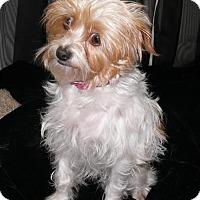 Adopt A Pet :: Sarah - REDDING, CA