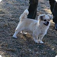 Adopt A Pet :: Truffle - Gardnerville, NV