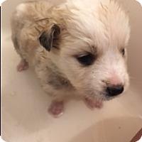 Adopt A Pet :: KYD - Glendale, AZ