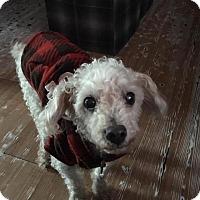 Adopt A Pet :: Harold - Manhattan Beach, CA