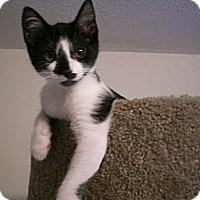 Adopt A Pet :: Tempi - Byron Center, MI