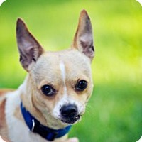 Adopt A Pet :: Bobby - South Amboy, NJ
