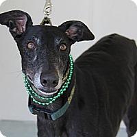 Adopt A Pet :: Sandy - Brandon, FL