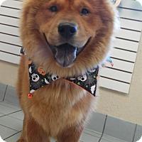 Adopt A Pet :: Skylar - Sacramento, CA