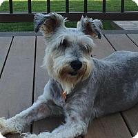 Adopt A Pet :: Mitzi - Springfield, MO