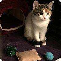 Adopt A Pet :: Dot - Hurst, TX