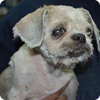 Adopt A Pet :: Wolly - Brooklyn, NY