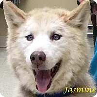 Adopt A Pet :: Jasmine - Zanesville, OH