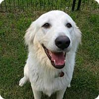 Adopt A Pet :: Dora - Garland, TX