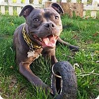 Adopt A Pet :: Skye ~ Sunshine Girl! - Caldwell, NJ