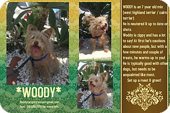 Cairn Terrier Mix Dog for adoption in Los Angeles, California - WOODY
