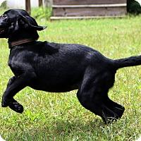 Adopt A Pet :: Mandy May - Glastonbury, CT