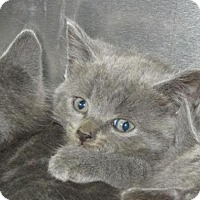Adopt A Pet :: Cat 0003 - Rocky Mount, NC