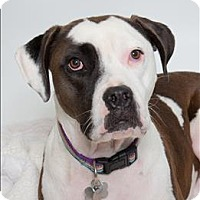 Adopt A Pet :: Buford - San Luis Obispo, CA