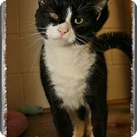Adopt A Pet :: Lola - Shippenville, PA