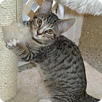 Adopt A Pet :: Bryant - Michigan City, IN