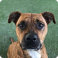 Adopt A Pet :: Molly, On Death Row! - Corona, CA