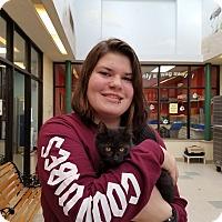 Adopt A Pet :: Smokie - Elyria, OH