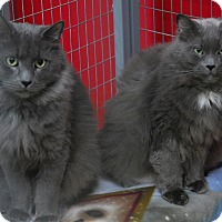 Adopt A Pet :: Louie & Lucy - Winchendon, MA