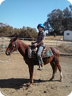 Quarterhorse Mix for adoption in Newcastle, California - Jax