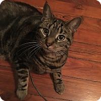 Adopt A Pet :: Raina - Carlisle, PA