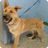 Adopt A Pet :: URGENT ON 12/14 San Bernardino - San Bernardino, CA
