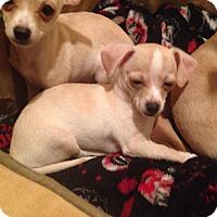 Adopt A Pet :: George - Winchester, CA