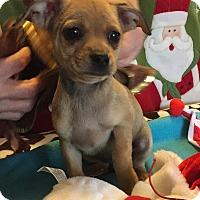 Adopt A Pet :: Robin - Santa Ana, CA