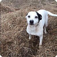 Adopt A Pet :: Betsy - Kittery, ME