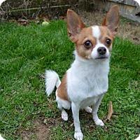 Adopt A Pet :: Oliver - Mebane, NC
