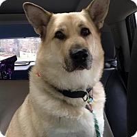Adopt A Pet :: WYATT - Knoxville, TN