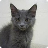 Adopt A Pet :: Matock - Milwaukee, WI