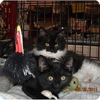 Adopt A Pet :: Alexandra & Cassan - Riverside, RI